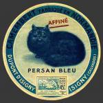 Calvados-1185 (chat persan1nv)